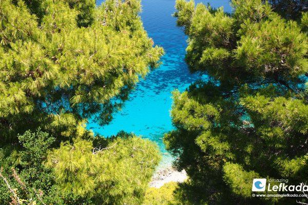 Flora in Lefkada