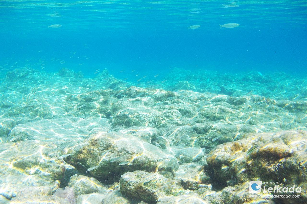 Sea life around Lefkada, Ionian Sea